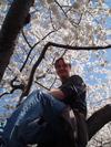 Tkelly_cherry_blossom_1